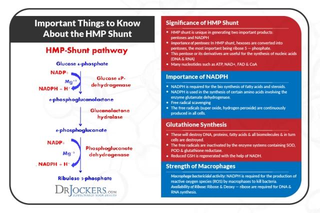 hmp-shunt-pathway-12-638